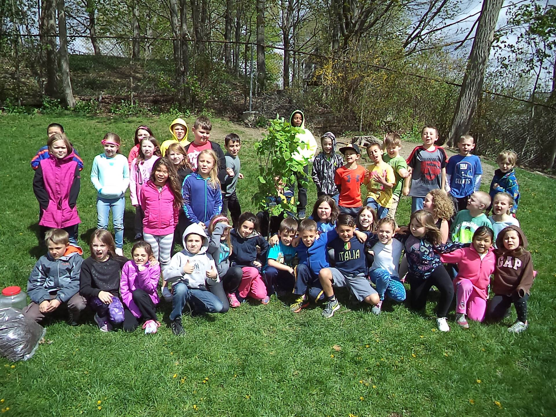 Second Grade Library Classes Plant Playground Tree