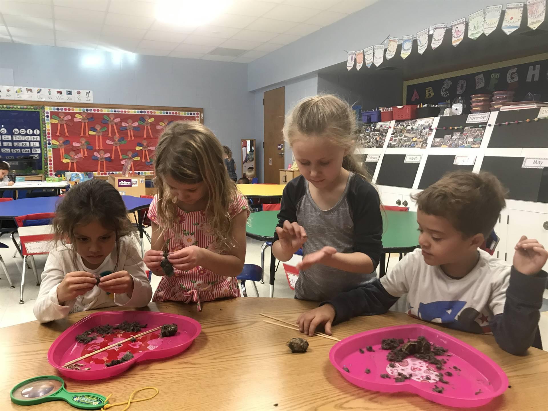 Kindergarten dissecting owl pellets