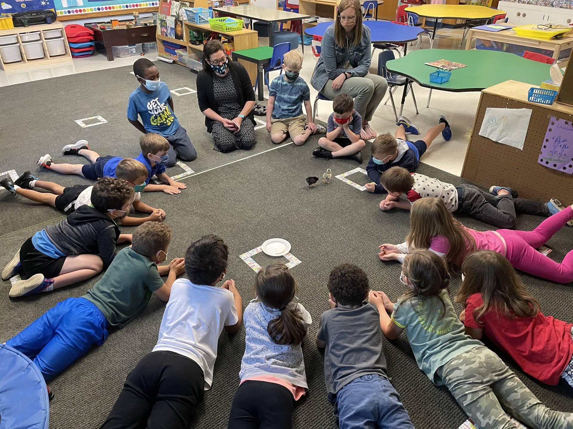 Kindergarten students with chicks